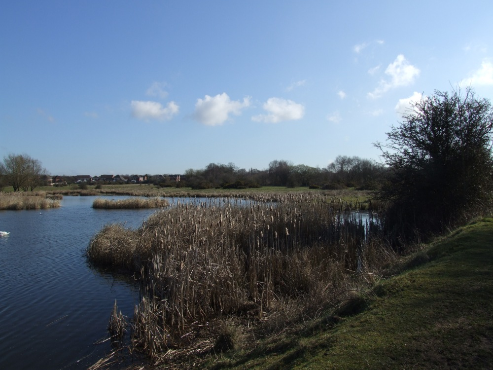 Looking back across Clayhanger Marshes. Image by madwblog.