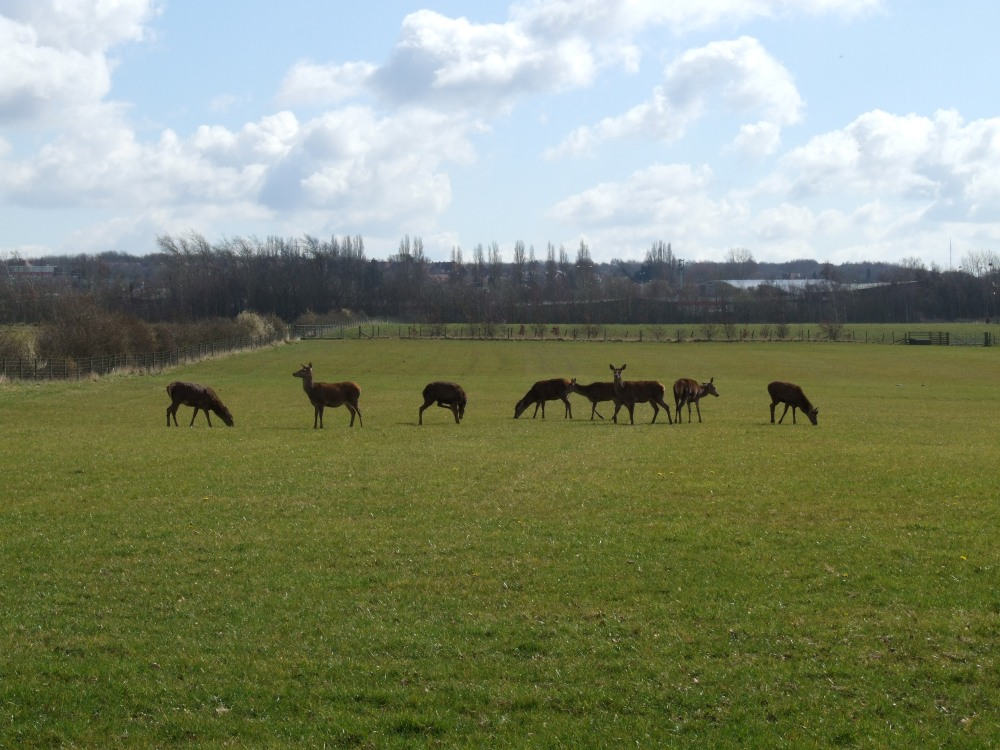 Red deer at the top of 'Old Clayhanger'. Image by madwblog.