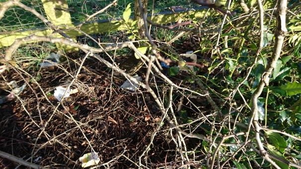 Hedgerow on Northfields Way: image madwblog